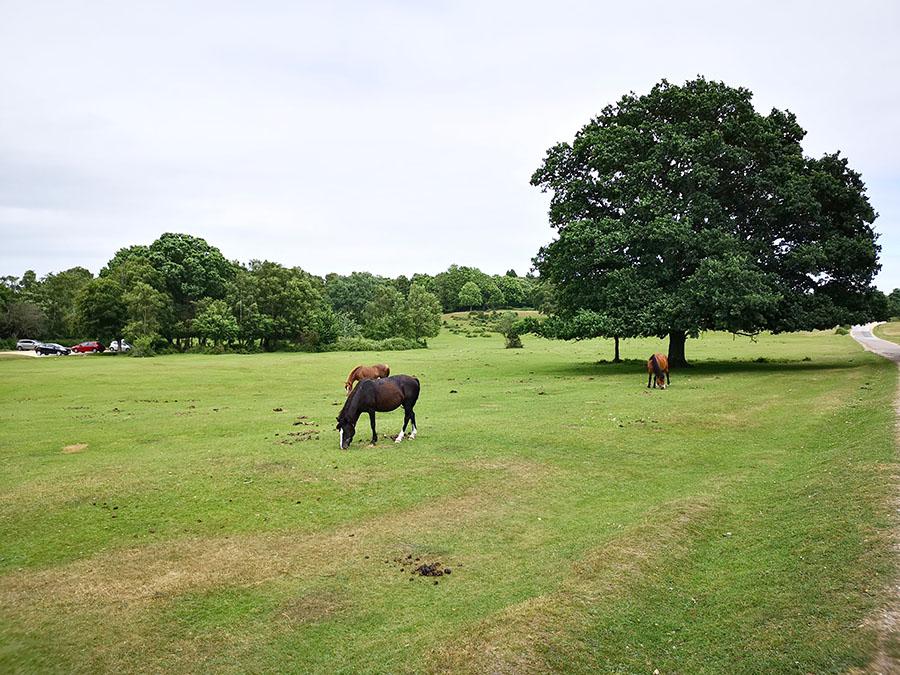 Линдхерст, заповедник Новый лес и свободные лошади
