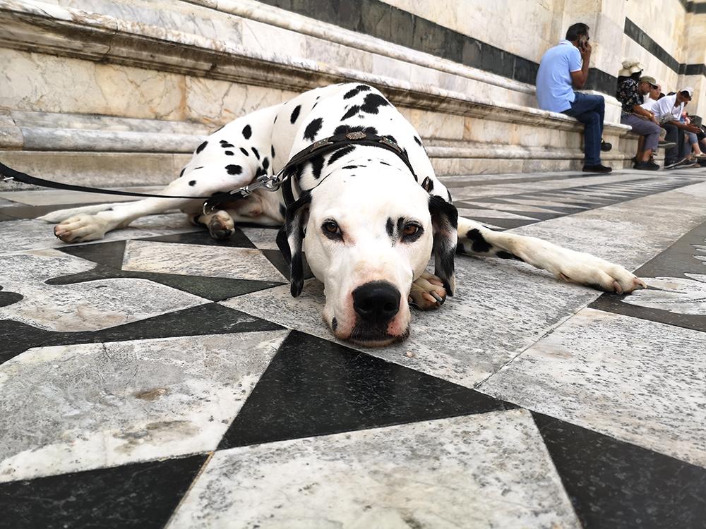 Как итальянские законы защищают права собак