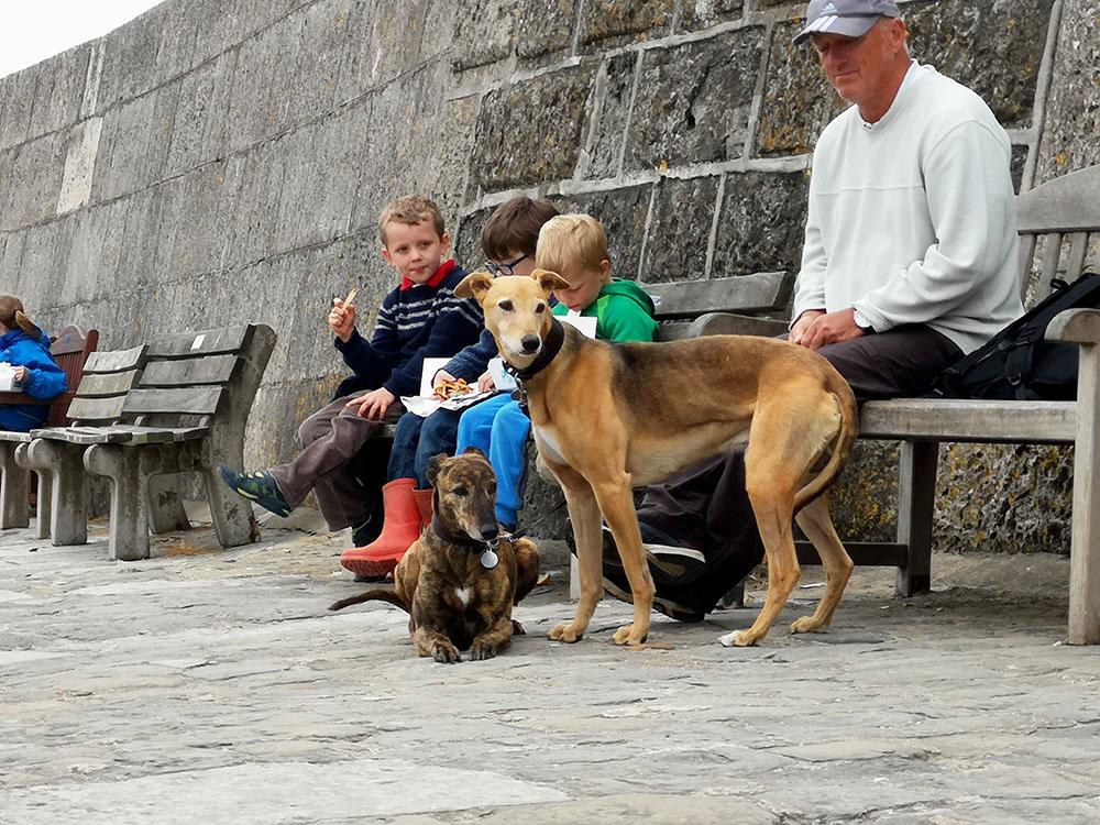 Как живут собаки в Великобритании