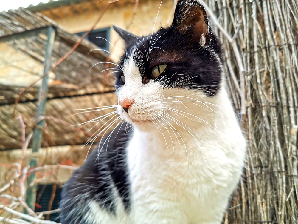 Кошки на Майорке: как им помогают местные власти
