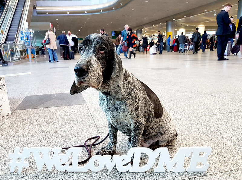 Как собаки работают в отделе безопасности аэропорта Домодедово