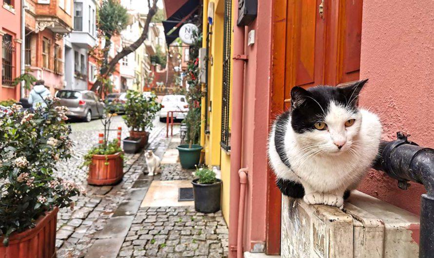 Кузгунджук. Самый живописный и самый толерантный район Стамбула